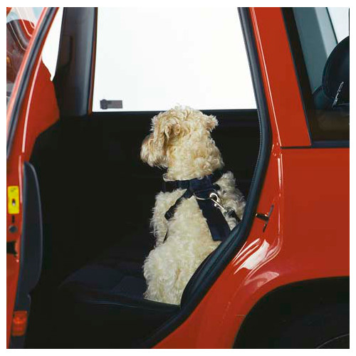 Koiran Autovaljaat